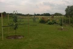 Æbletræerne er plantet