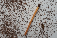 Frø af Tobaksplante/Nicotiana sylvestris