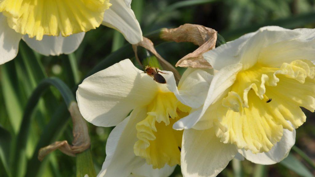 Vild bi