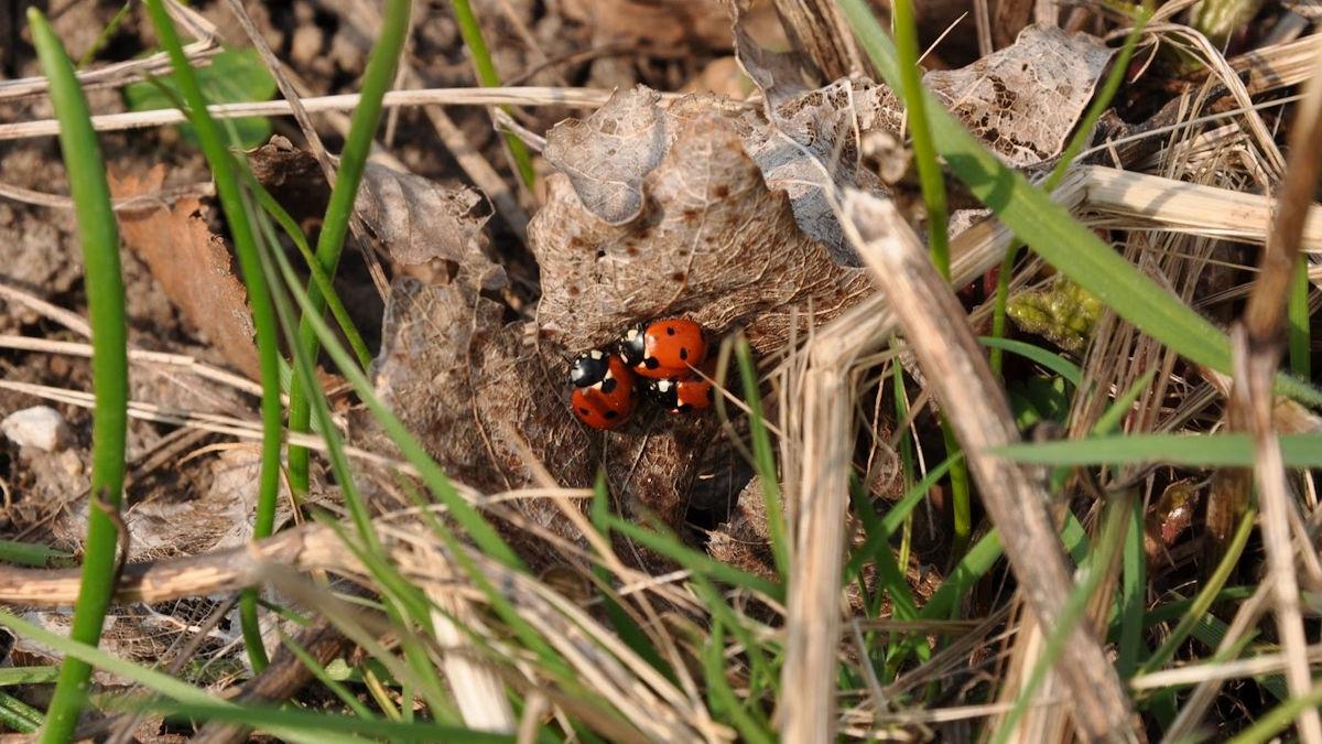 Bevis på insektliv