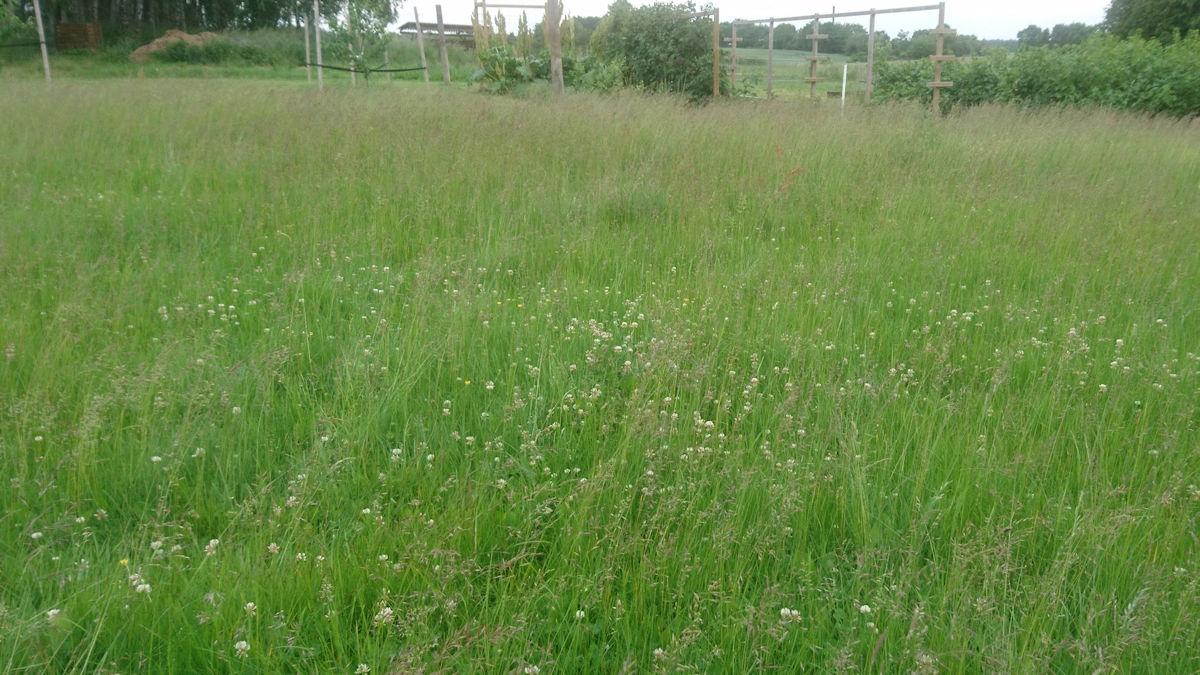 Græsplæne der fik lov til at vokse